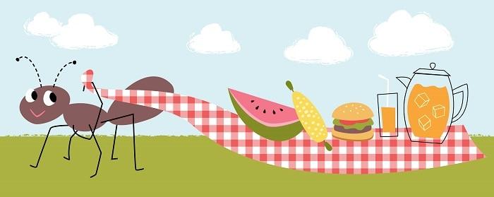 Get rid of ants at a picnic