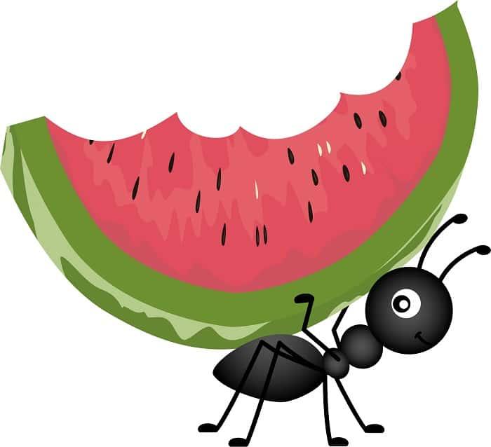Picnic pest control
